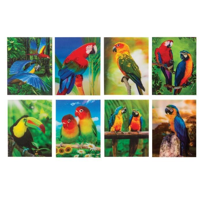 Блокнот А7, 40 листов на клею «Попугаи», пластиковая обложка 3D