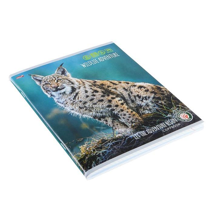 Тетрадь 96 листов клетка «Хищники», обложка мелованный картон
