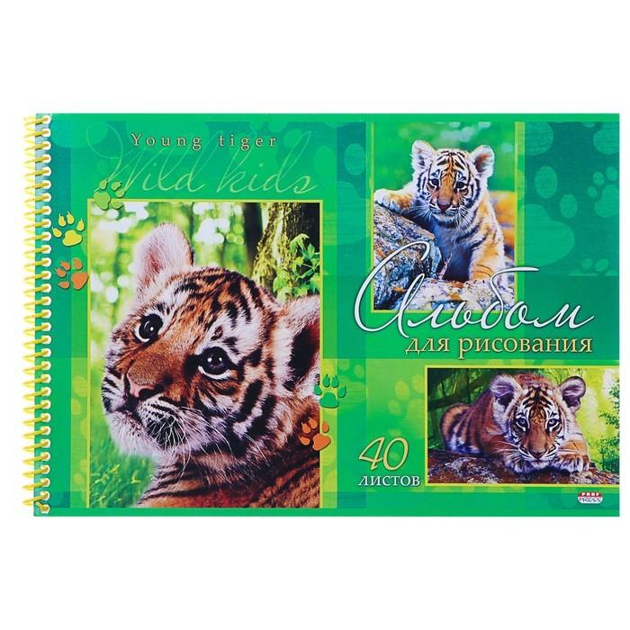 Альбом для рисования А4, 40 листов на гребне «Очаровательный тигрёнок», обложка мелованный картон