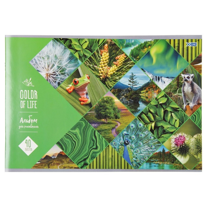 Альбом для рисования А4, 40 листов на скрепке Color of life, обложка мелованный картон, МИКС